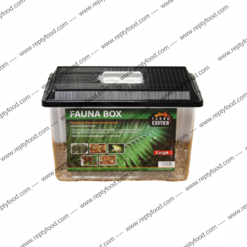 TERRA EXOTICA FAUNA BOX LARGE